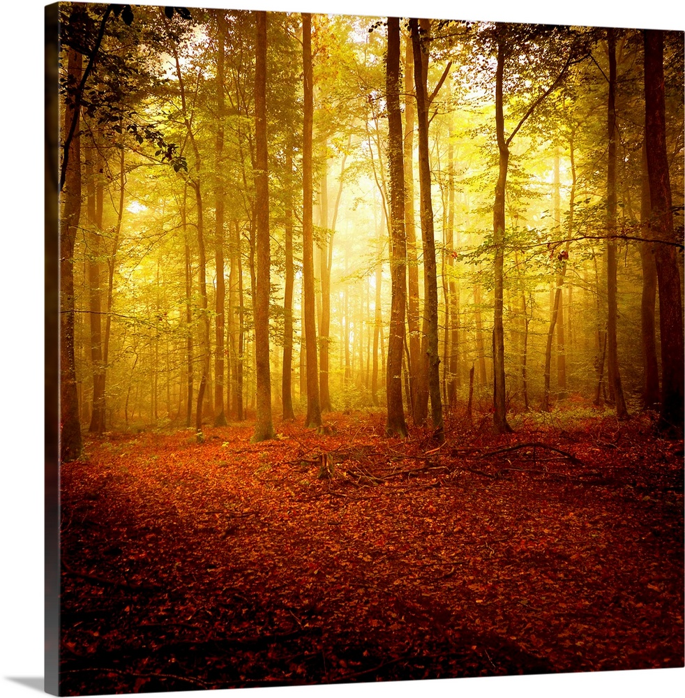 The Smell Of Autumn Wall Art Canvas Prints Framed Prints Wall Peels Great Big Canvas