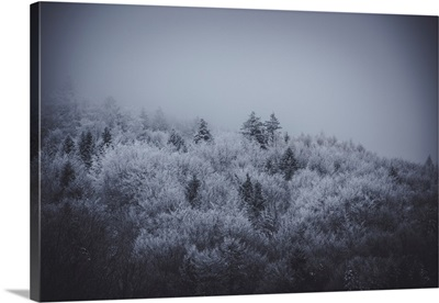 The Texture Of Fog