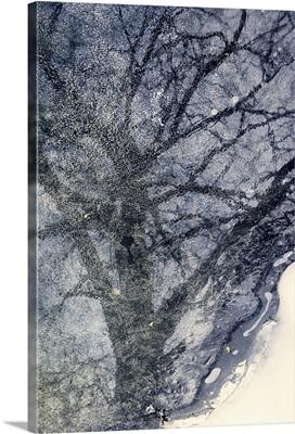 Tree On Ice