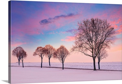 Trees In The Winter Wind