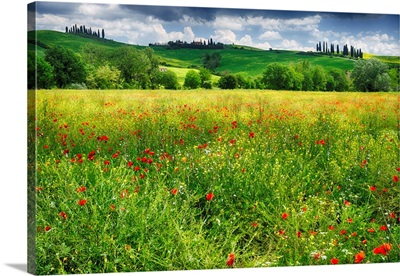 Tuscan Spring Meadow
