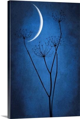 Under the Moon I