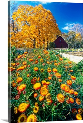 Vertical View of a Fall Garden, Vicks Historic Farm, Jockey Holl