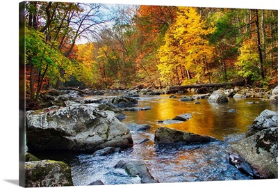 Vibrant Hues of Autumn, New Jersey