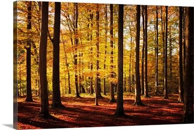 Walk Between Trees