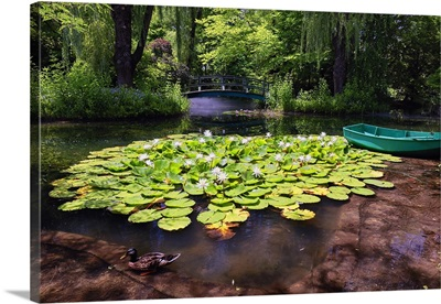 Water Lily Pond I