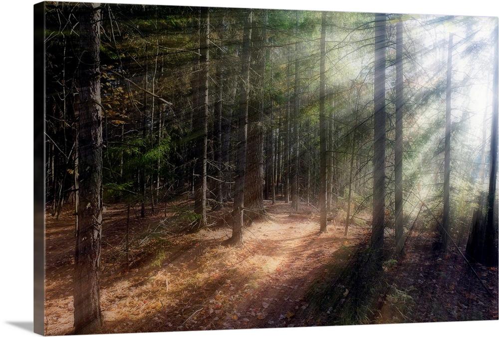 Whispering Light Wall Art Canvas Prints Framed Prints Wall Peels Great Big Canvas