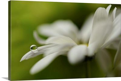 White creamy green ll