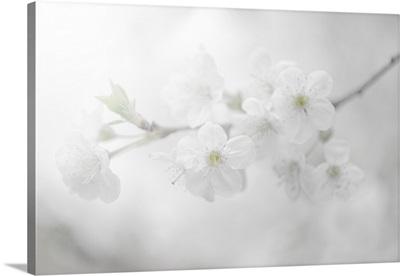 White Spirit and Positive Sensations