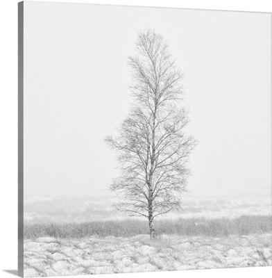 Winter Softness II
