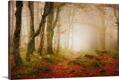 Yellow Forest Mist
