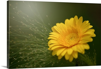 Yellow Like The Sun