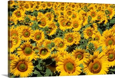 Yellow Swirls
