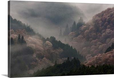 Yoshino, Japan I