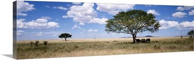 Africa, Kenya, elephants