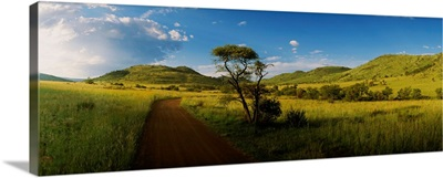 African Bush South Africa