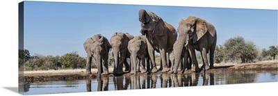 African Elephants at waterhole, Mashatu Game Reserve, Botswana