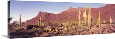 Alamo Canyon Organ Pipe Cactus National Park AZ