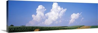 Alfalfa and Hay Farm IL