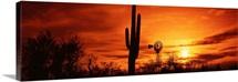 Arizona, Sonoran Desert, sunset
