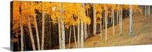 Aspen Grove Ouray CO