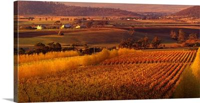 Australia, Tasmania, Richmond, vineyard