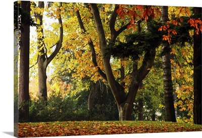 Autumn Color Trees