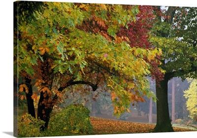 Autumn color trees, fallen leaves, Oregon, united states,