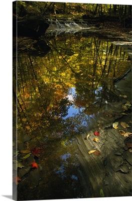 Autumn color trees reflected in stream, Ohio