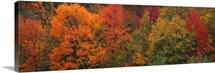 Autumn Trees CT