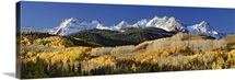 Autumnal view of aspen trees and the Rocky Mountains, San Juan National Park, Colorado