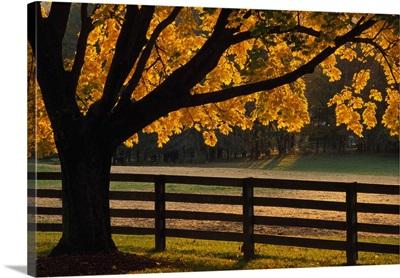 Back lit autumn color tree and fenceline, Maryland