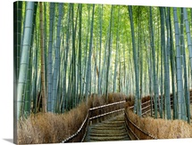 Bamboo forest, Kyoto City, Kyoto Prefecture, Japan