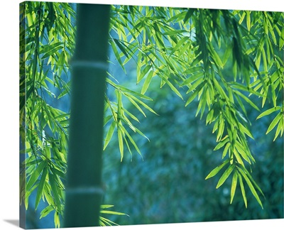 Bamboo tree in a forest, Saga Prefecture, Japan