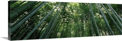 Bamboo trees, Arashiyama, Kyoto Prefecture, Kinki Region, Honshu, Japan