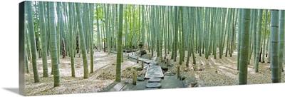 Bamboo trees at a temple, Hokokuji Temple
