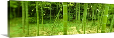 Bamboo trees in a park, Tokyo Prefecture, Kanto Region, Honshu, Japan