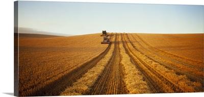 Barley Harvest Temuka New Zealand