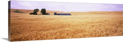 Barn in a wheat field, Palouse Country, Washington State