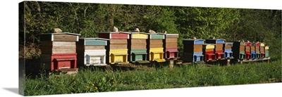 Bee Hives Switzerland