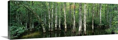 Big Cypress Nature Preserve FL