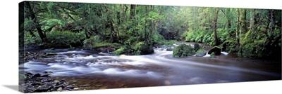 Bird River Franklin Gordon Wild Rivers National Park Tasmania Australia