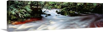 Bird River Tasmania Australia