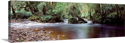 Bird River World Heritage Area Tasmania Australia