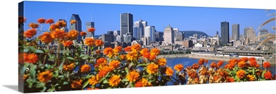 Blooming flowers with city skyline in the background, Montreal, Quebec, Canada 2010