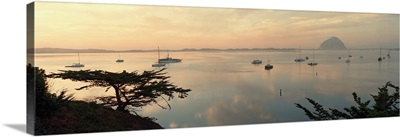 Boats in a bay, Morro Bay, California