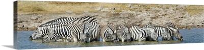 Burchell's Zebras at waterhole, Etosha National Park, Namibia