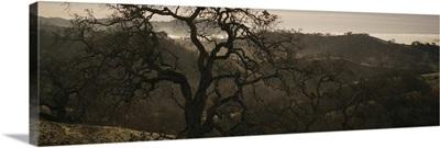 California, Henry W Coe State Park, Oak tree on a hill