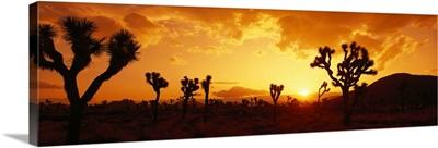 California, Joshua Tree Park, sunset