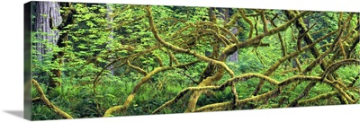 California, Redwood National Park